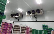refrigerazione e conservazione uva